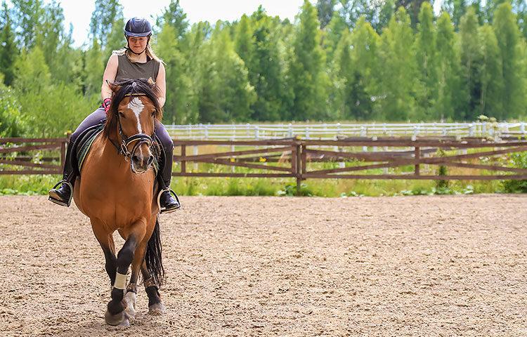 Jenny aloitti ratsastuksen yhdeksänvuotiaana. Sen jälkeen ei hänen elämäänsä paljon muuta enää mahtunutkaan. Hevoset sekä kuntouttavat että tuovat paljon iloa ja jännitystä sekä ystäviä.
